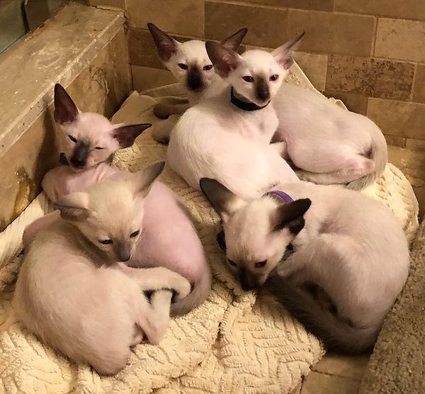 kittens-may1.jpg