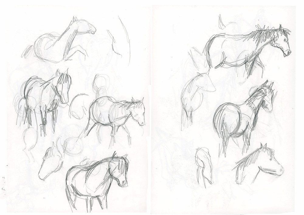 Sketches of Tamlin the horse from Tamlin's Great Adventure by Victoria Byron Published by Starfish Bay