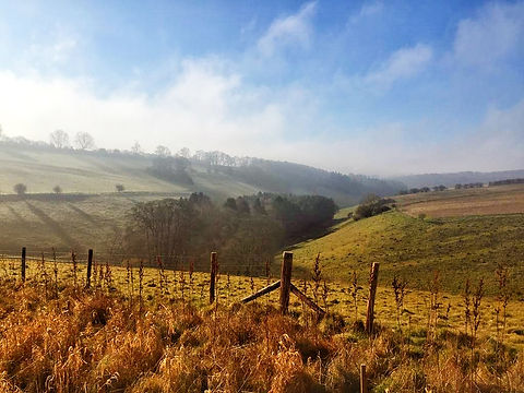 Dorset Valley.jpg