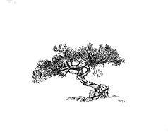 26 Twisted Cypress (2).jpg