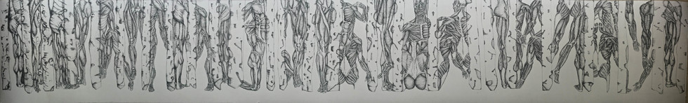 Muscular Birch Forms