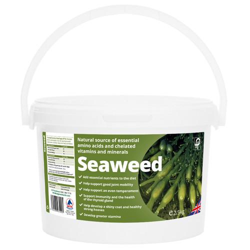 Seaweed-1000x1000.jpg