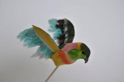 80. pappagallo