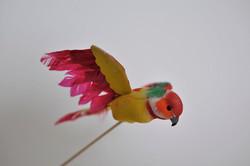 50. pappagallo