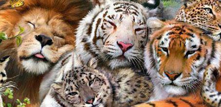 A Wedding amongst Wild Cats