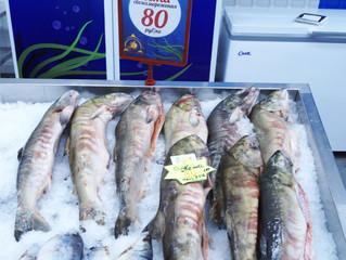 ТЦ «Экодом» реализует краевой проект «Доступная рыба»