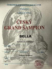 Český grand šampion.JPG