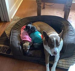 Big dogs thinking they are little. I wil