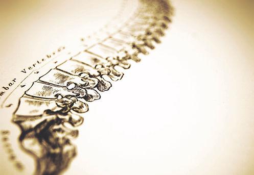 spine 1 1.jpg