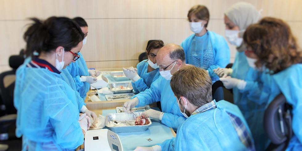 Cycle complet en implantologie