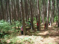 pine_forest_on_pine_island.4142642_large.JPG