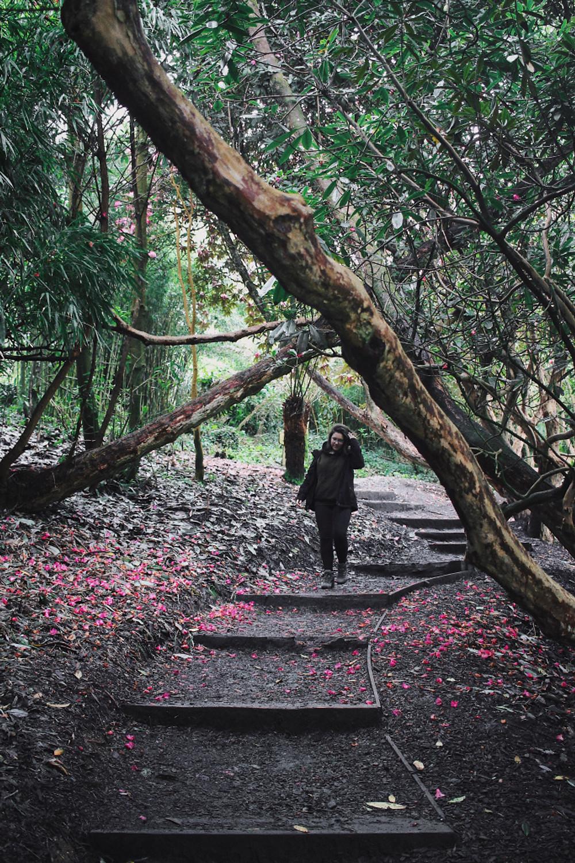 Too Many Plants Blog - Corwnall & Devon (Gardens of Heligan)