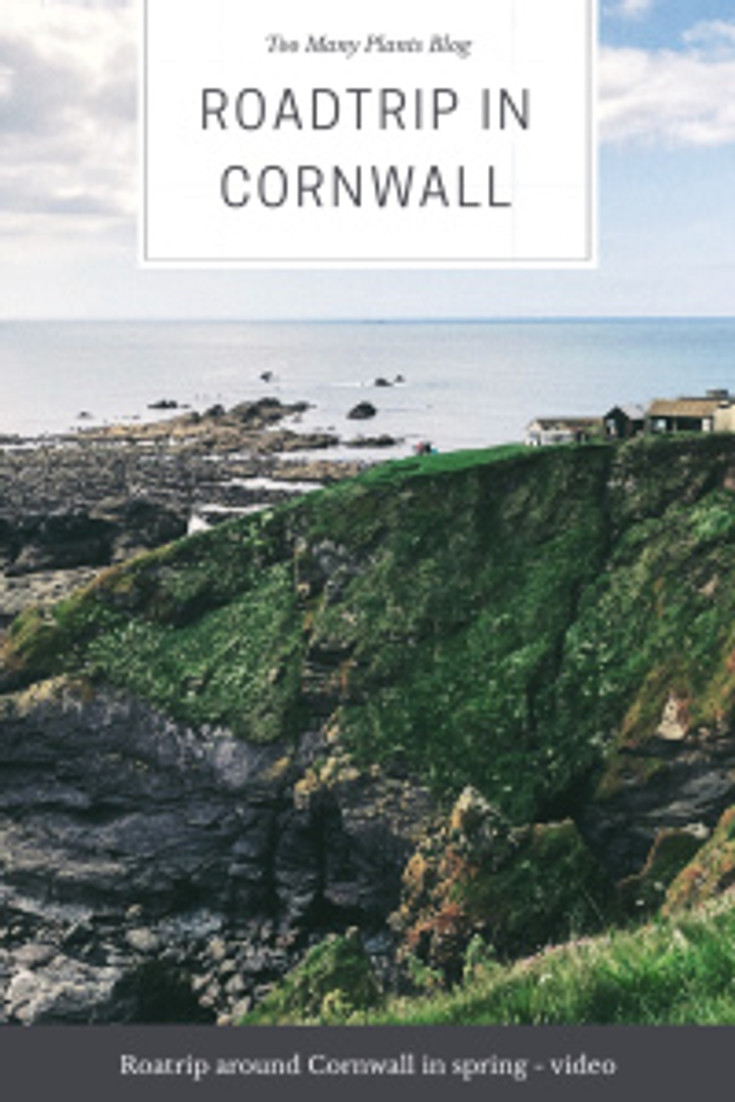 Cornwall - road trip (Too Many Plants Blog)