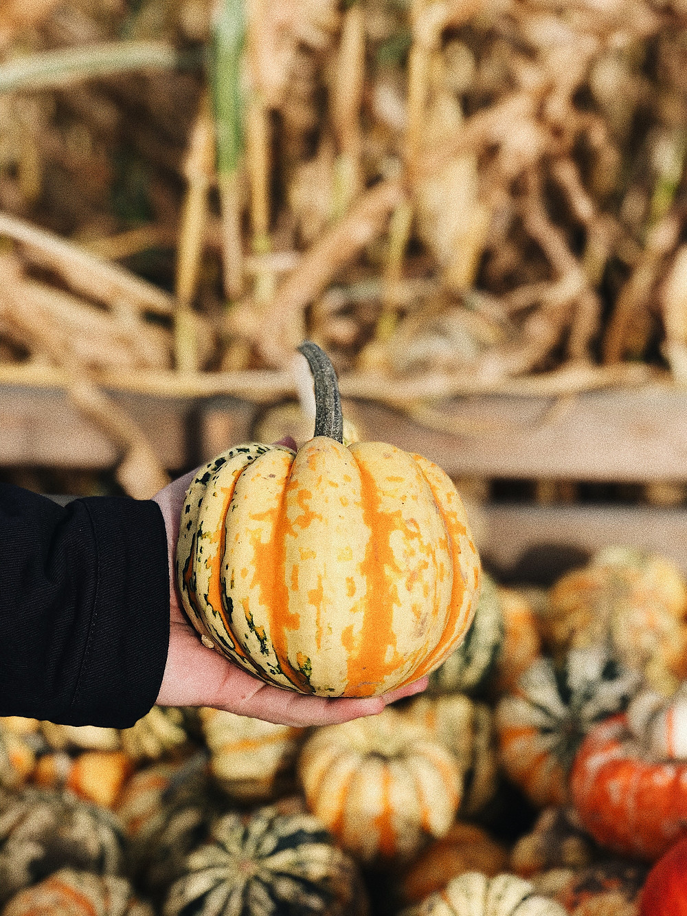 Foxes Farm Pumpkin patch - Connecting the London dots