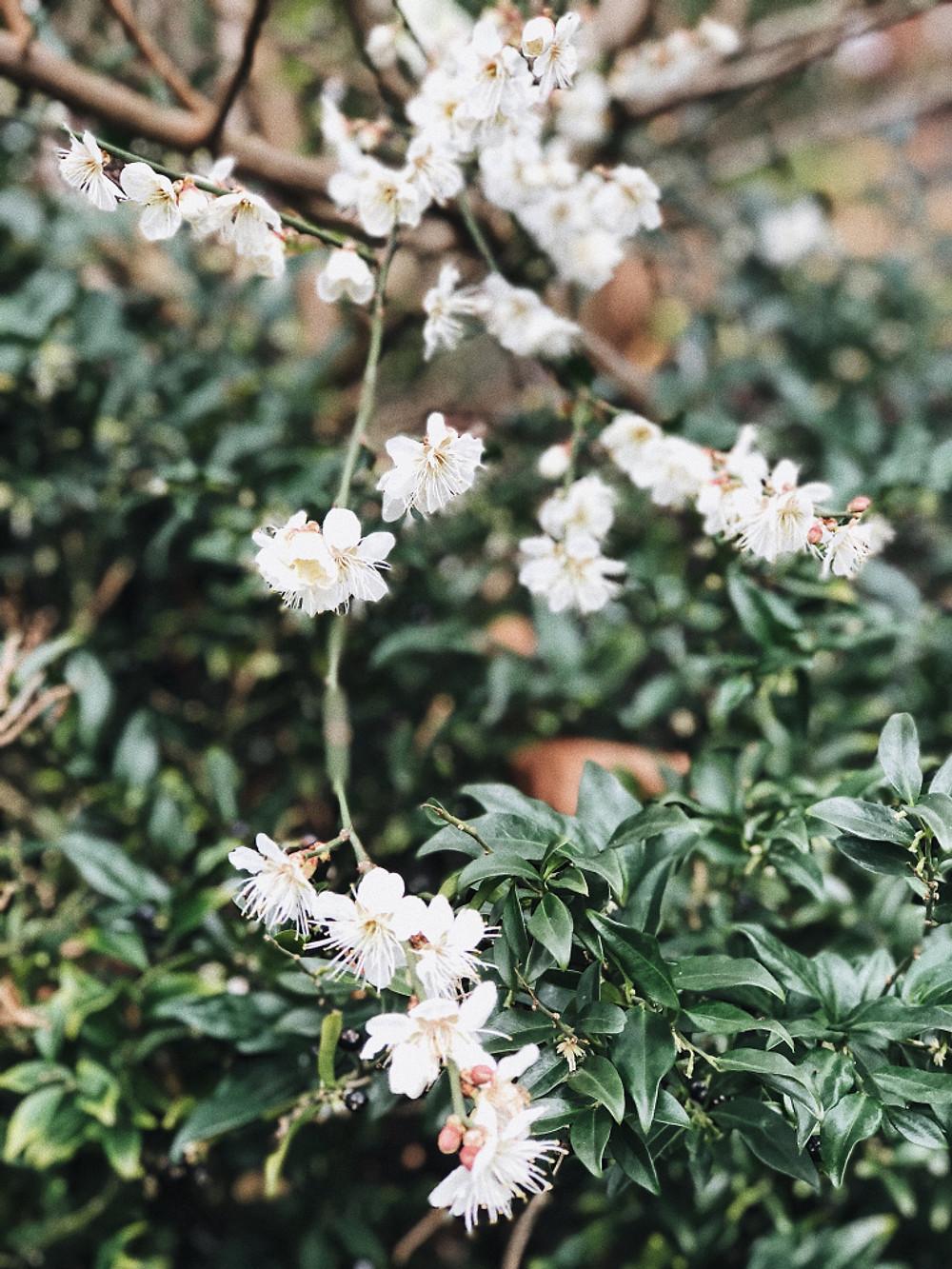 Chelsea Physic Garden, oldest botanical garden in London - Too Many Plants Blog