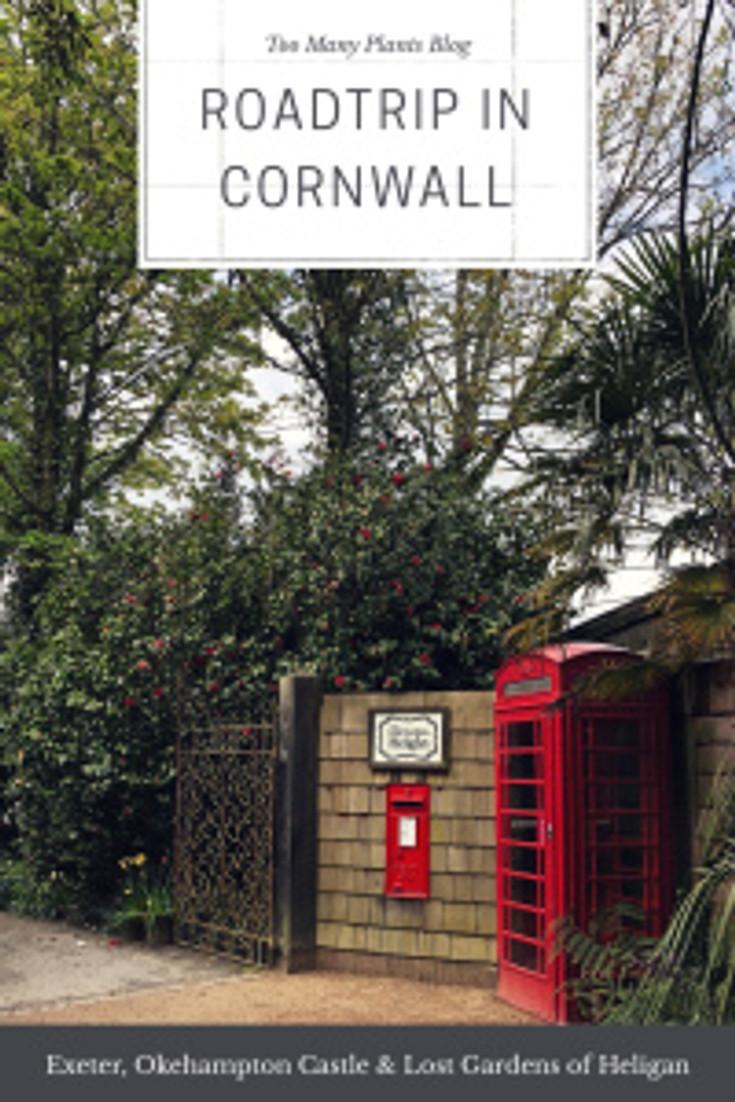 Too Many Plants Blog - Corwnall & Devon