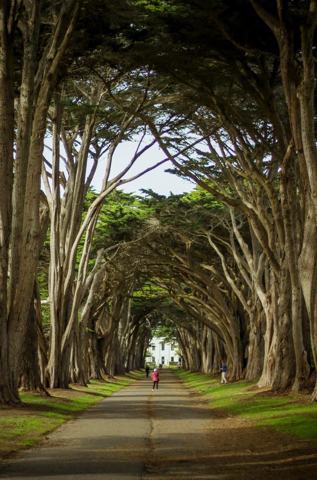 Cypress Tree Tunnel, Pt. Reyes, CA