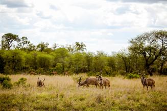 Kudu Pack