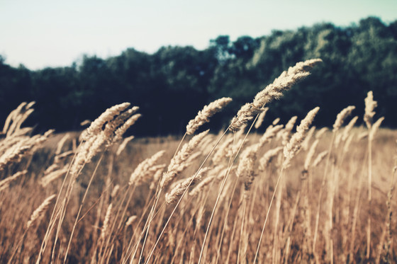 Demystifying Wheat & Gluten Sensitivities