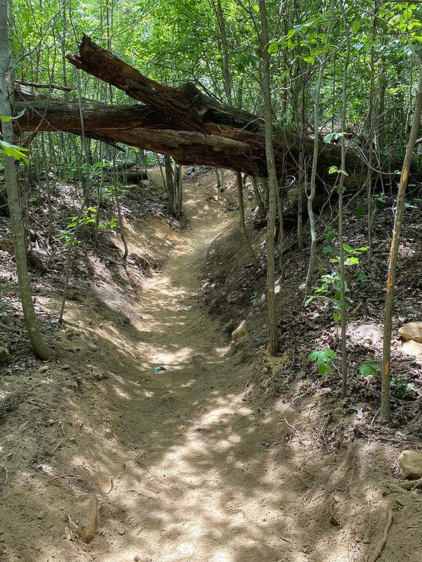 Path Under Falled Tree.jpg