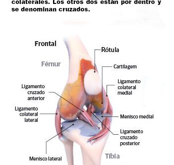 La dolorosa Rotura de Ligamento Craneal Cruzado en Perros y su solución.