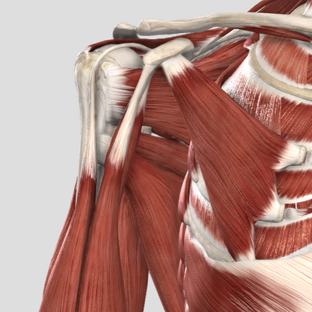 Can Muscles Overpower Tendons? Why On-Boarding Timelines Are Important.