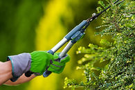 Gardening and Landscaping Industry Theme