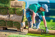 Natural Grass Turf Professional Installe