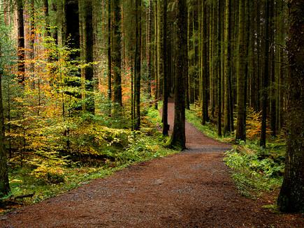 Entwistle Woods