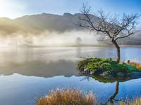 Lone Tree, Rydal Water