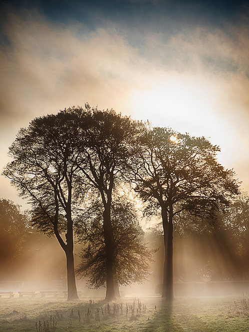 Trees in the mist at Moss Bank Park, Bolton BL047