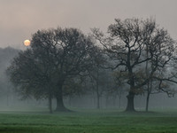 Trees in the Mist, Moss Bank Park