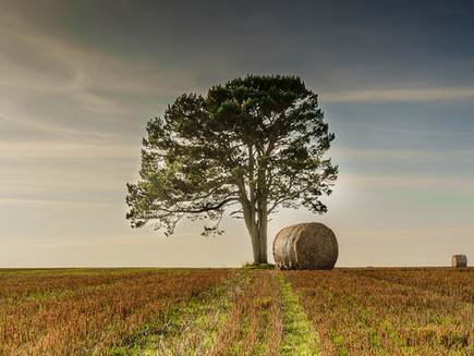 Lone Tree and Bale, Scarborough