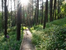 Walker Fold Woods