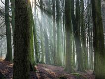 Shaft of Sunlight, Rivington