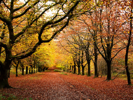 Rivington Autumn