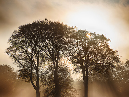 Trees in the Mist at Moss Bank Park