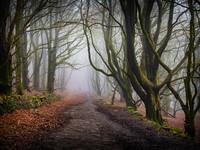 Tockholes Woods