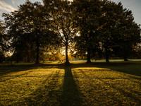 Sunrise, Moss Bank Park