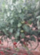 Planta Cuarentayseis.jpg