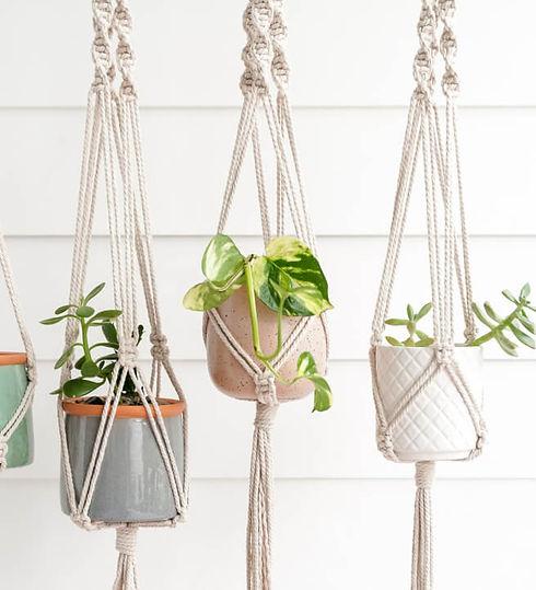 macrame-pot-hanger-pot-plant-sip-graze-b