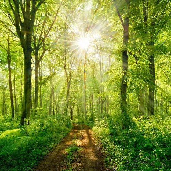 arbre-foret-naturosoin-mediation-nature.