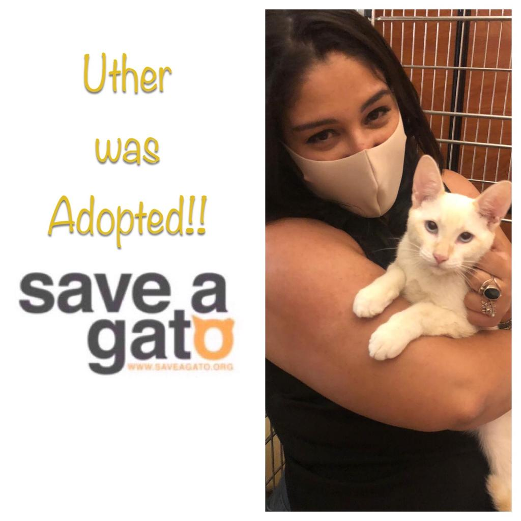 Uther adopted