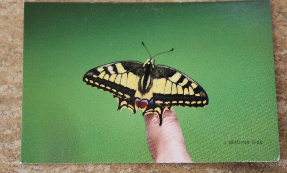 Grande carte papillon