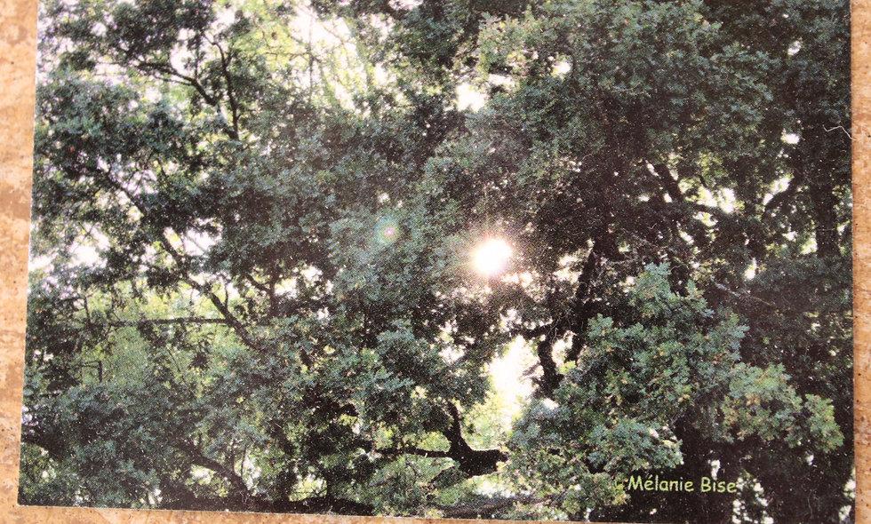 Grande carte forêt