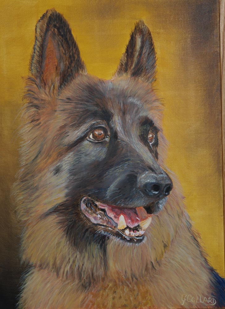 pet portraits of german sheppard