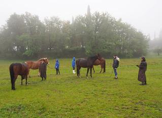 STAGE: La scioltezza a cavallo