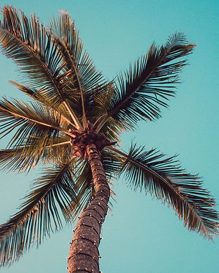 low-angle-photography-of-coconut-tree-10