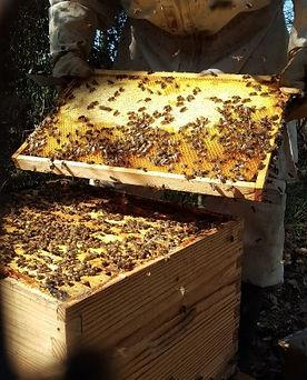 apiculteur2.jpg