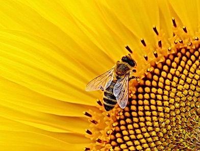 sunflower-1643794_640.jpg